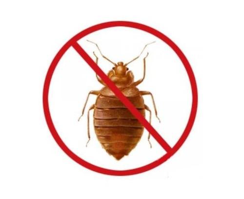 как вытравить паразитов из организма человека